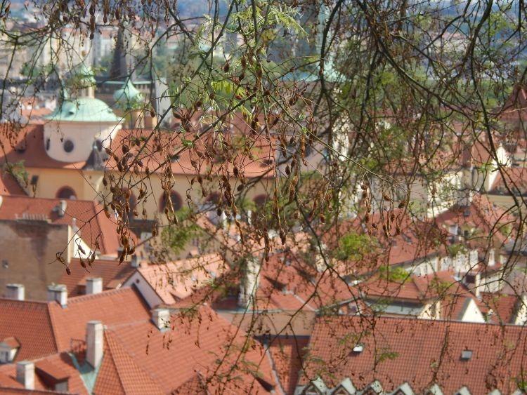 prag-krovovi (5)